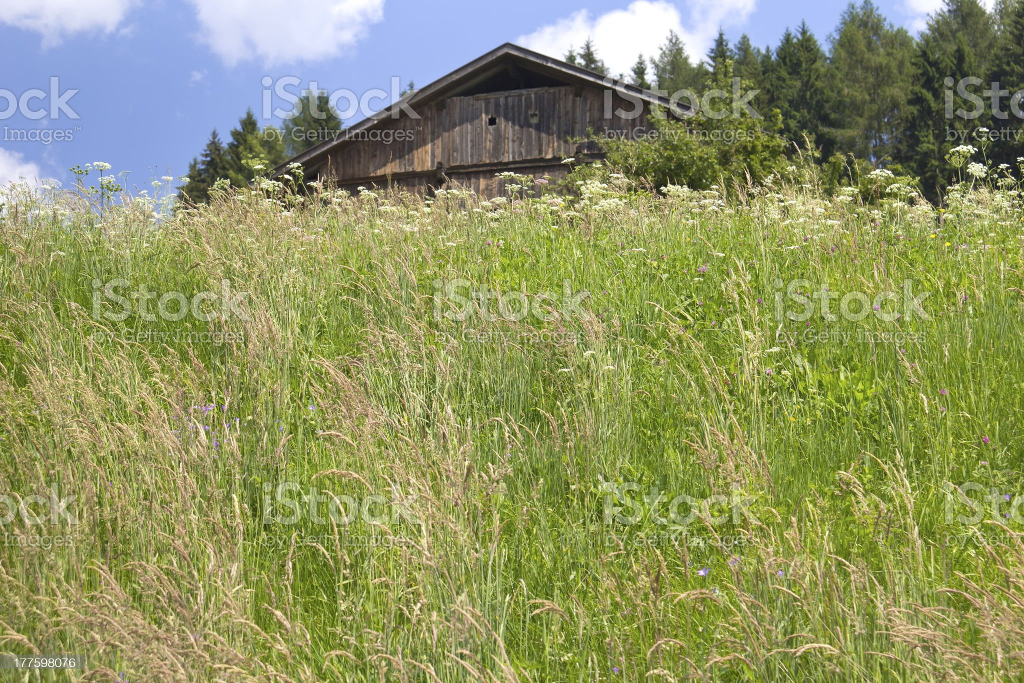 Beautiful Meadow in the Alps royalty-free stock photo