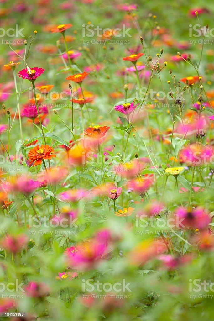 Beautiful meadow of wild flowers. stock photo