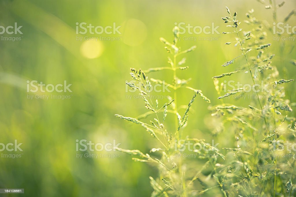 Beautiful meadow royalty-free stock photo