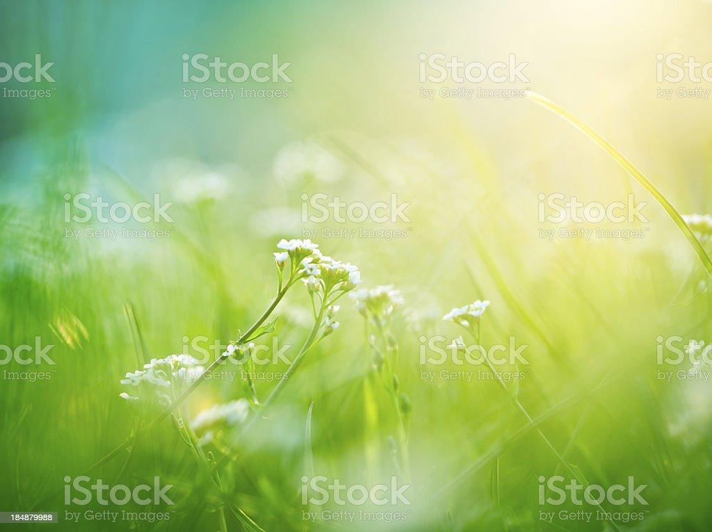 Beautiful meadow stock photo