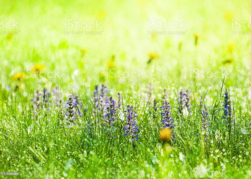 Beautiful meadow with wild flowers royalty-free stock photo