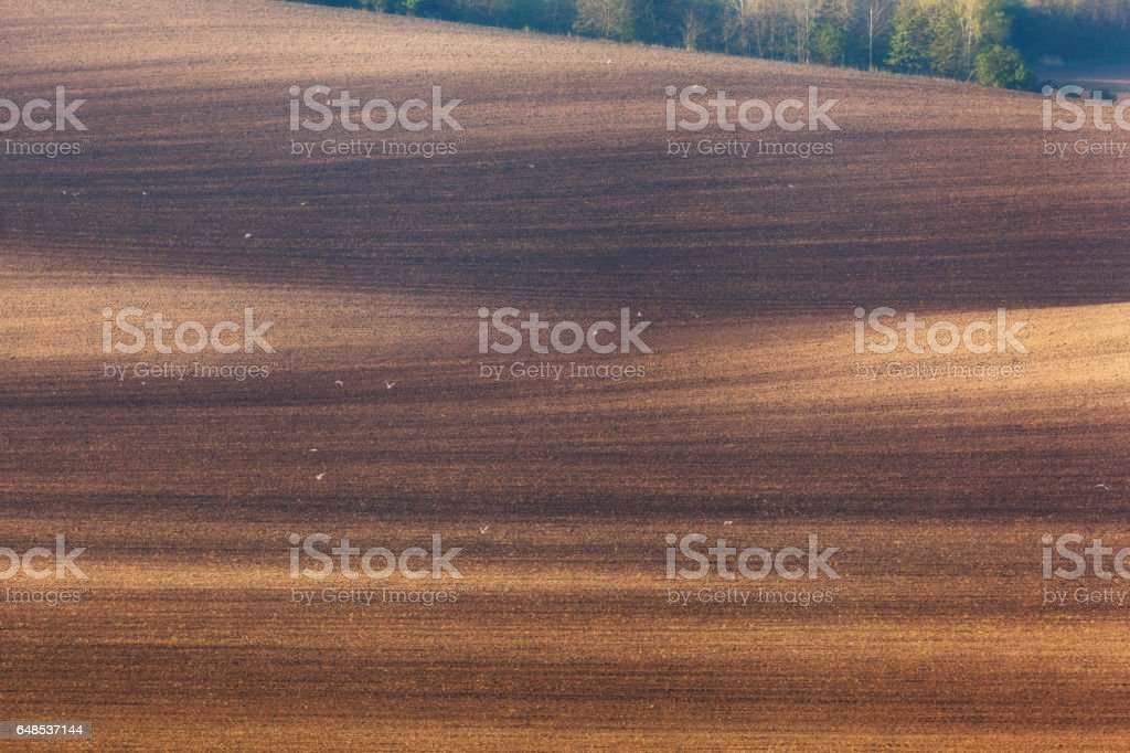 Beautiful minimalistic landscape with striped wavy fields of South Moravia at sunset. Abstract nature background with brown ground and trees. Rolling hills in spring in  Czech republic. Agriculture stock photo