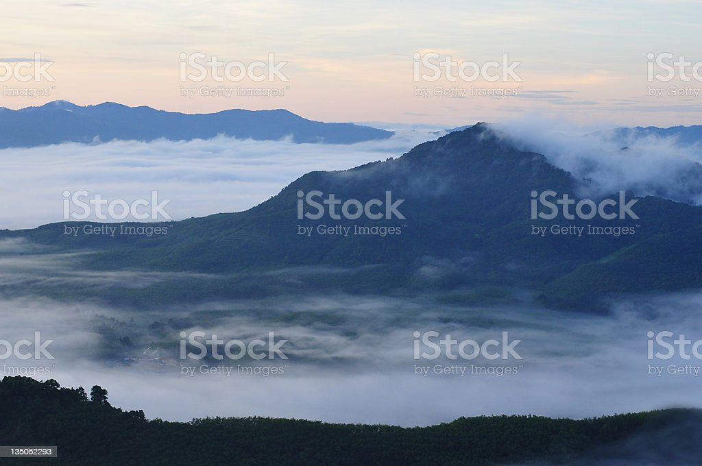 beautiful misty early morning forest stock photo