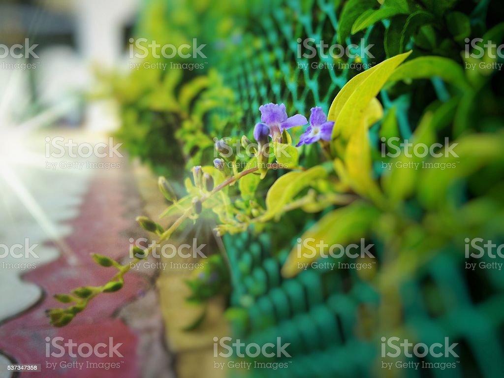 Beautiful morning flower stock photo