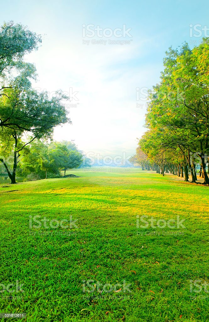 beautiful morning light in public park stock photo