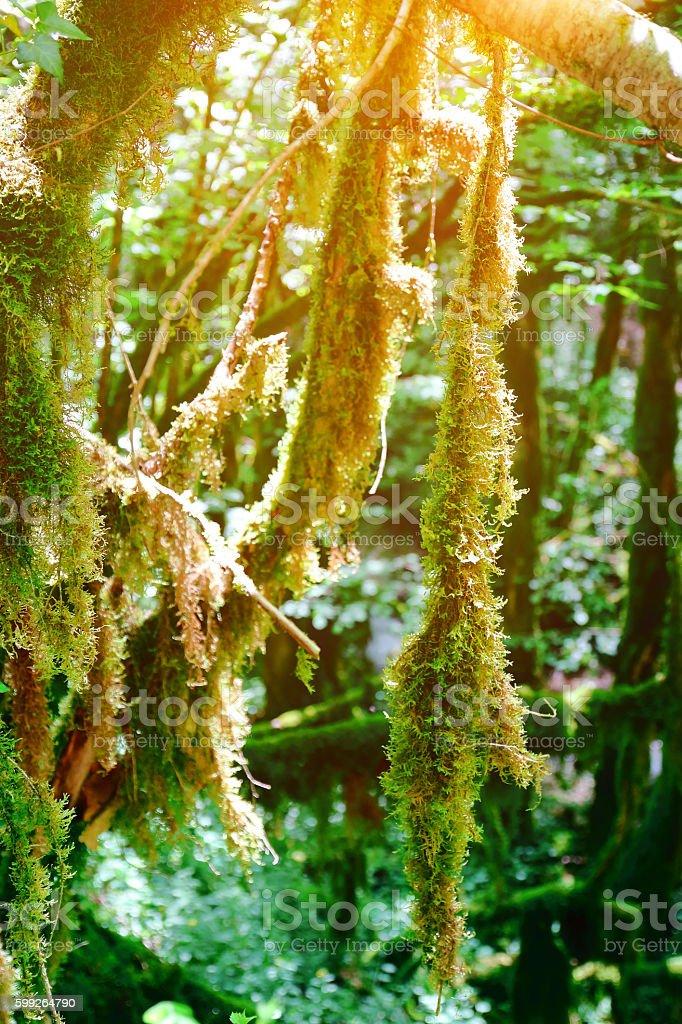 Beautiful moss growing on trees under sunlight in wetland woods stock photo