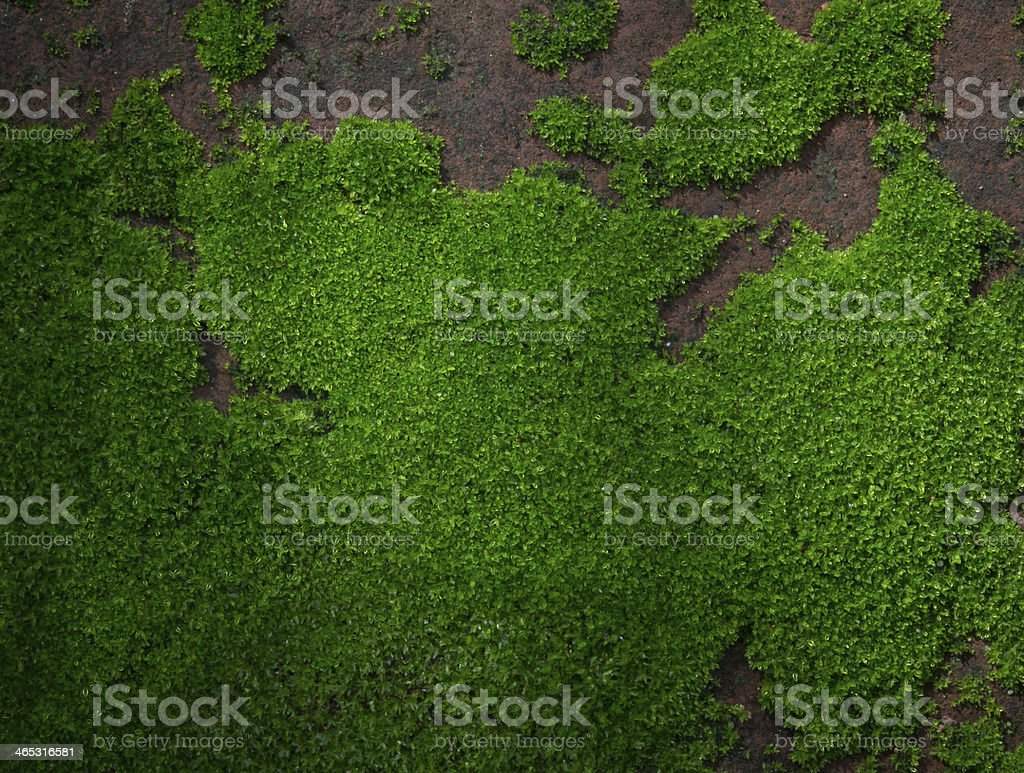 beautiful moss on brown stone stock photo