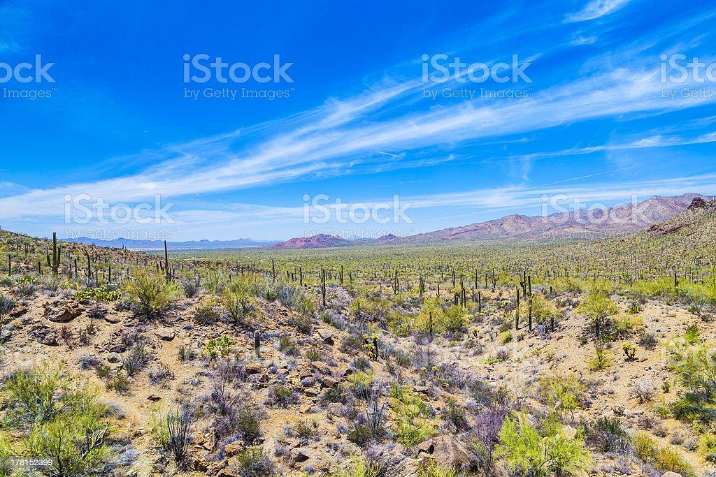 beautiful mountain desert landscape with cacti stock photo