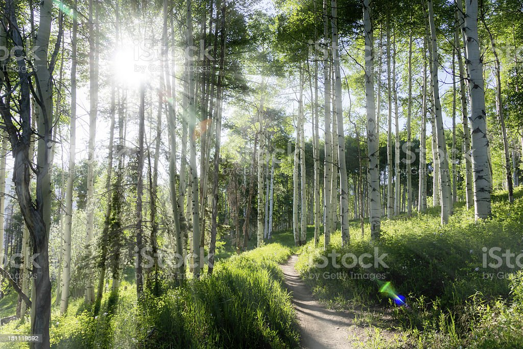 Beautiful Mountain Hiking Trail Through Aspen Trees of Vail Colorado stock photo