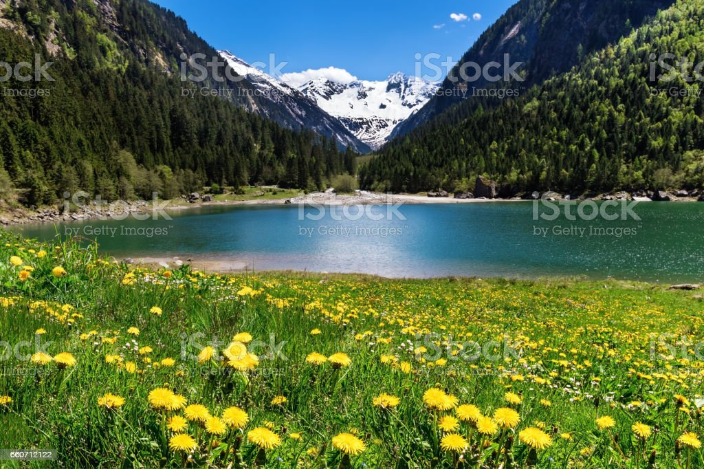 Beautiful mountain landscape with lake and meadow flowers in foreground. Stillup lake, Austria, Tyrol stock photo