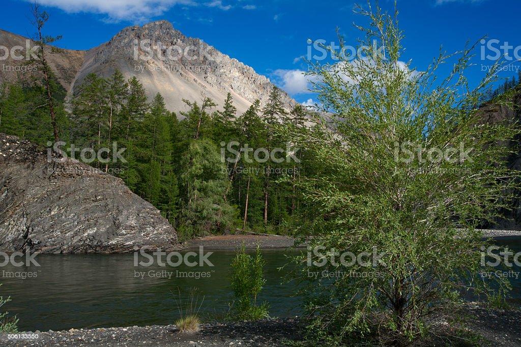 Beautiful mountain river and taiga. stock photo
