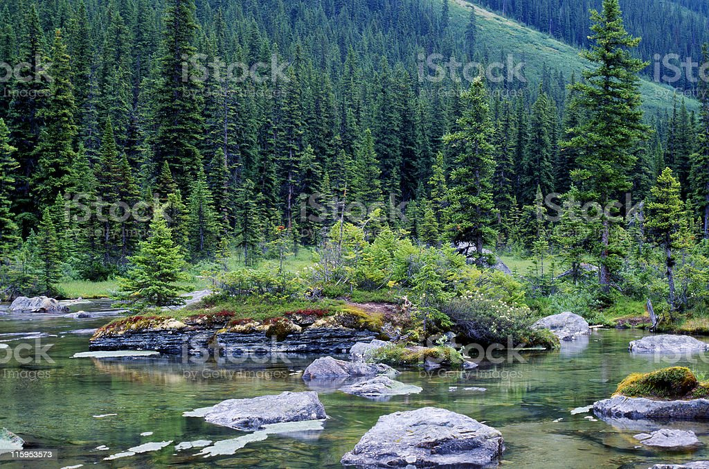 Beautiful mountain river with hillside covers in pine trees stock photo