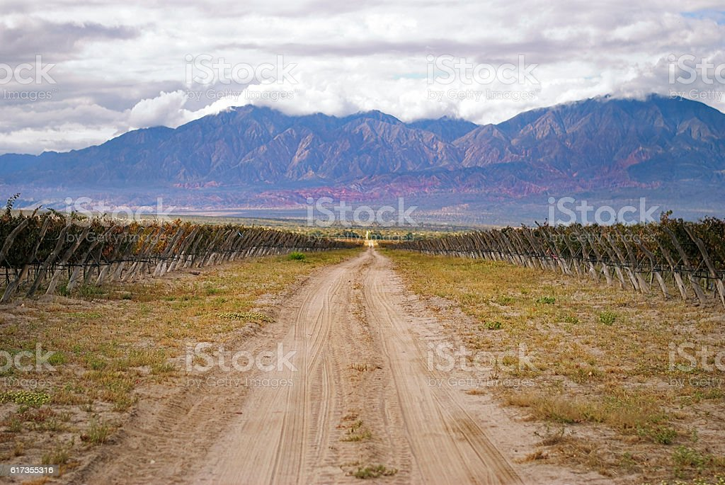 Beautiful mountain scenery while grapes are riping in the sun stock photo