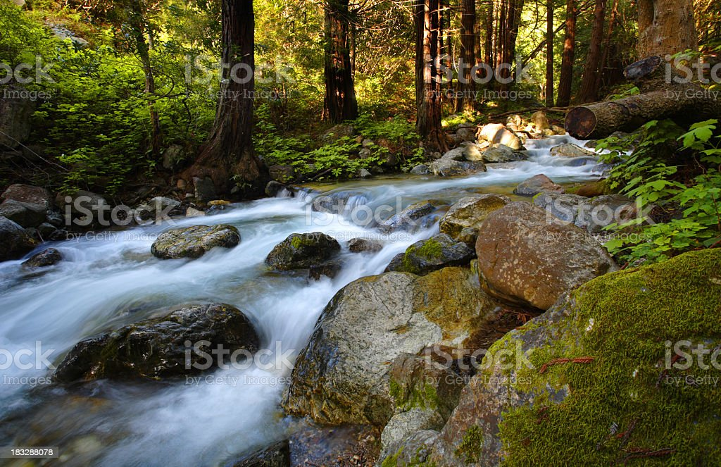 A beautiful mountain stream flowing rapidly in nature stock photo