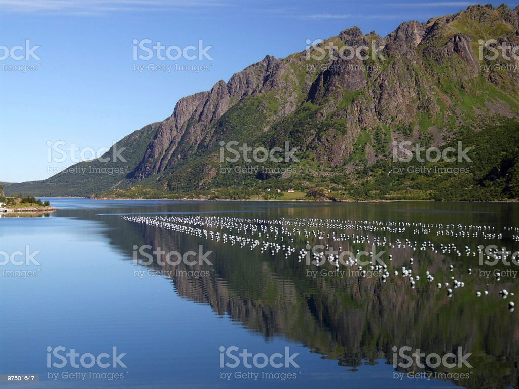 Beautiful mountains and oyster farm stock photo