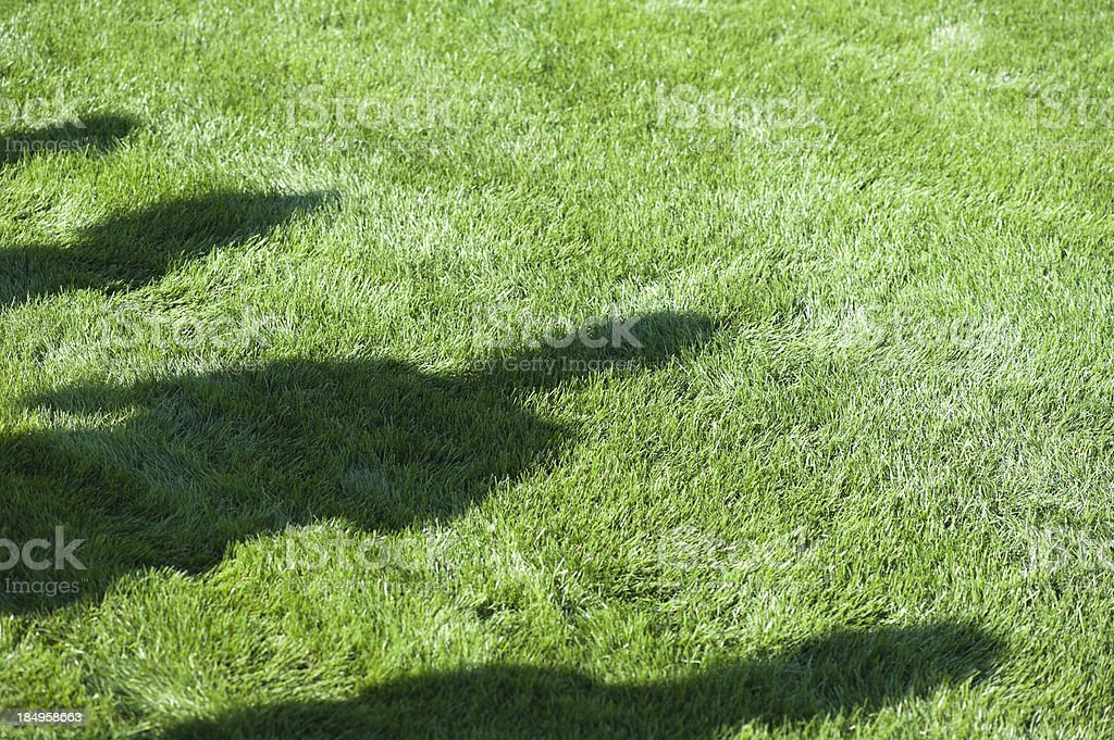 beautiful mowed grass at a golf course with shadows royalty-free stock photo