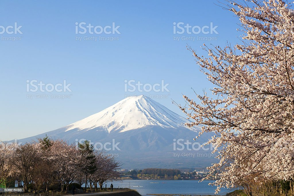 Beautiful Mt. Fuji and Cherry blossom from a Kawaguchiko lake stock photo