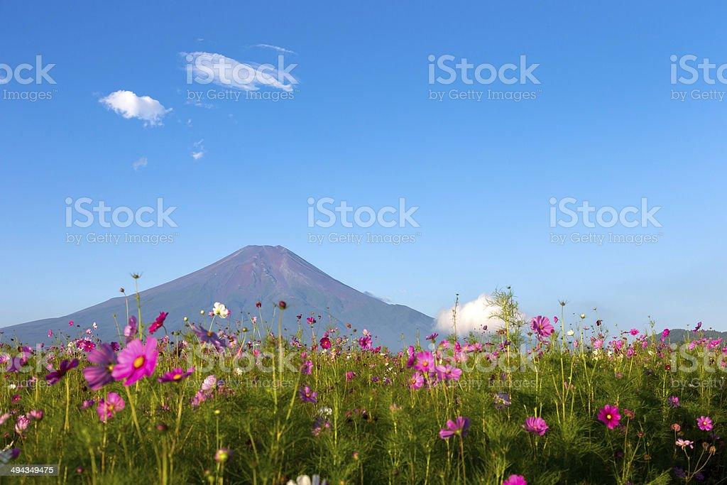 Beautiful Mt. Fuji from a OshinoHakkai area stock photo