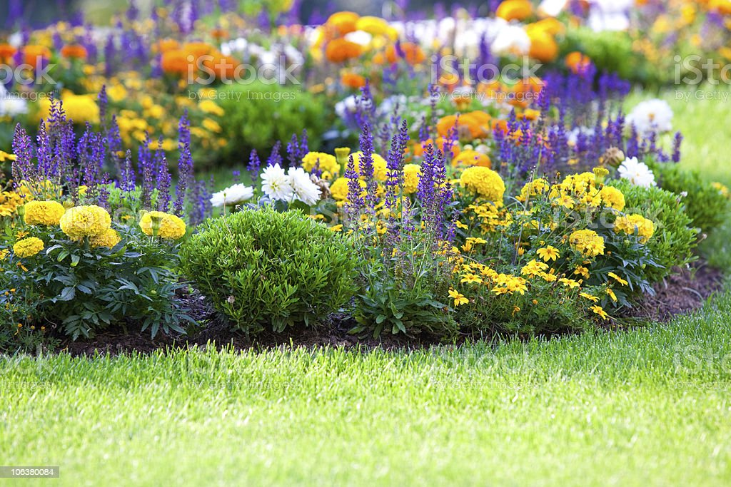 Beautiful multicolored flowerbed on green lawn stock photo