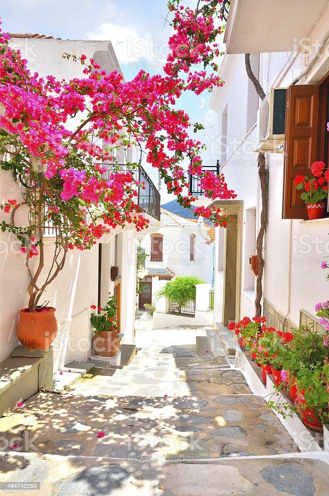 Beautiful narrow street with bougainvillea in full blossom, Skopelos, Greece stock photo