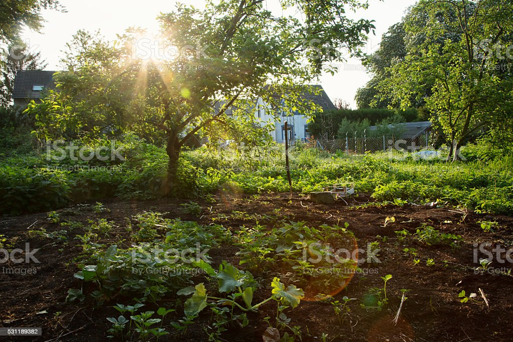 Beautiful natural garden with cherry tree stock photo