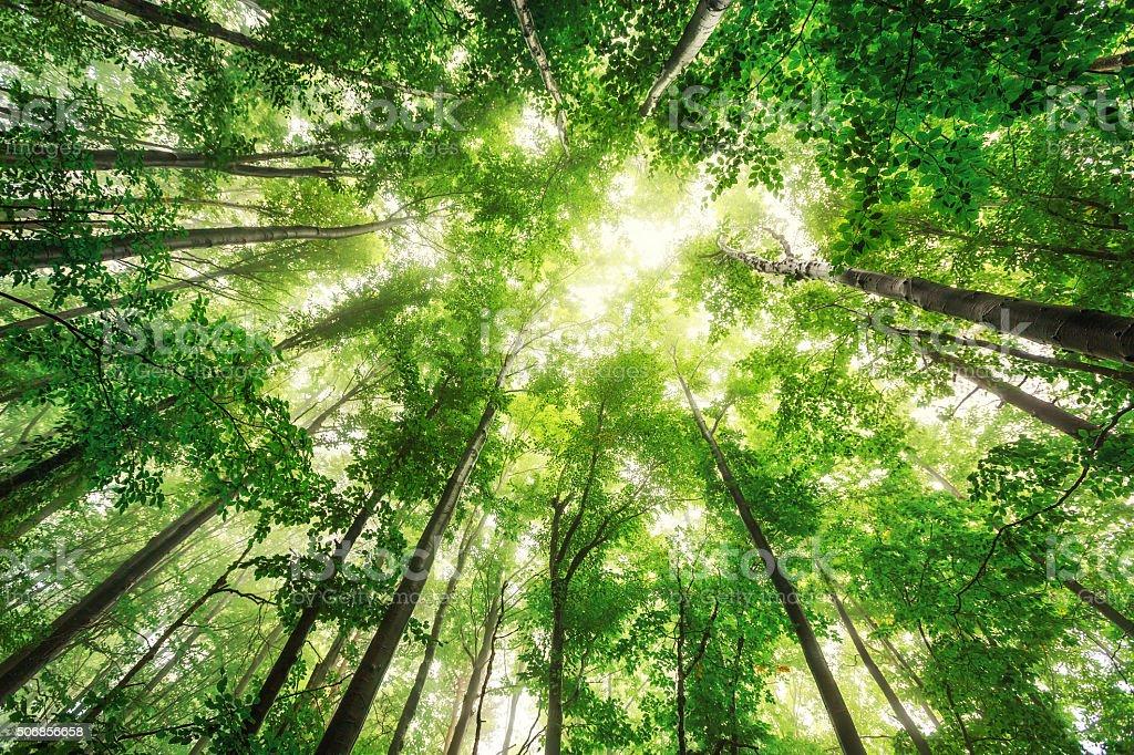 Imagini pentru nature