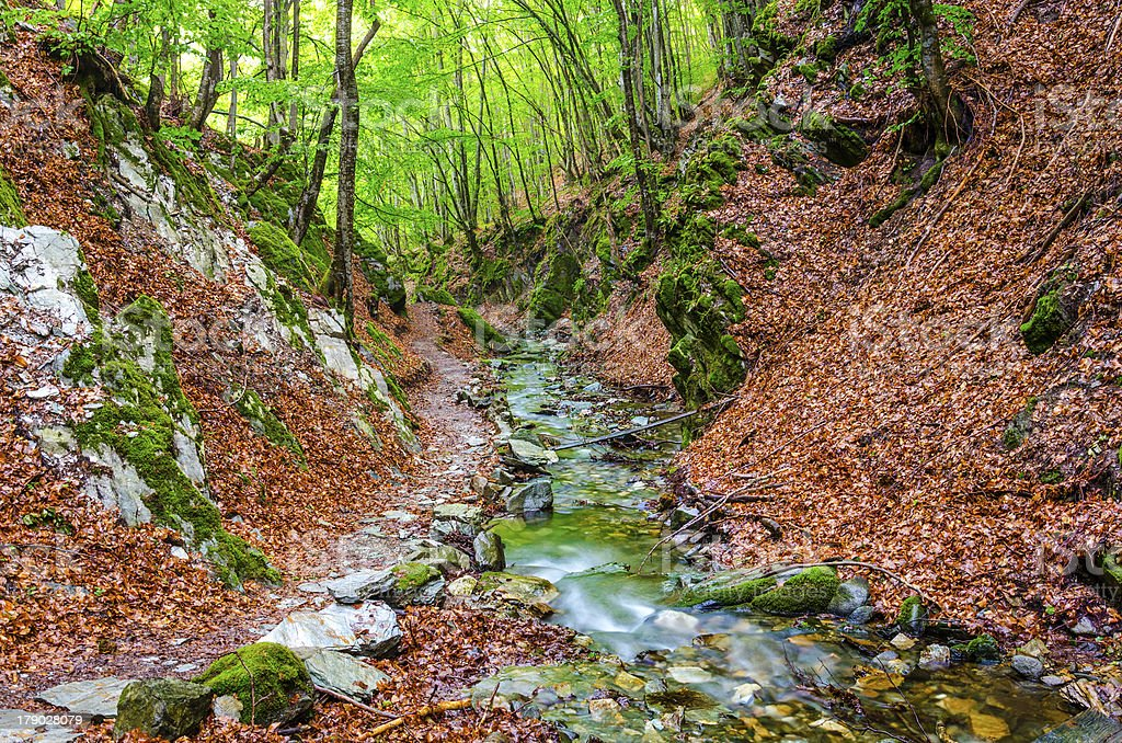 Beautiful nature composition of rainforest stream, Macedonia royalty-free stock photo