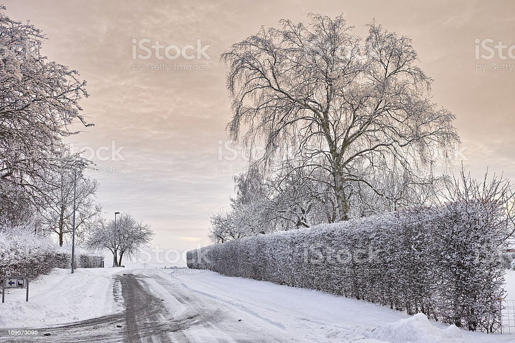 Beautiful nature covered in snow stock photo