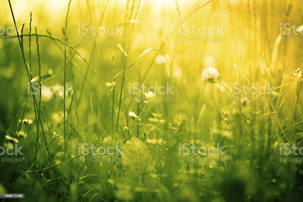 Beautiful nature in green and yellow tones stock photo