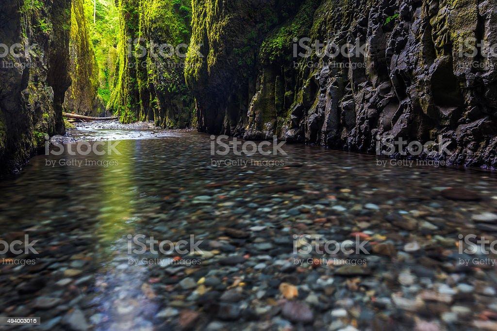 beautiful nature in Oneonta gorge trail, Oregon. stock photo