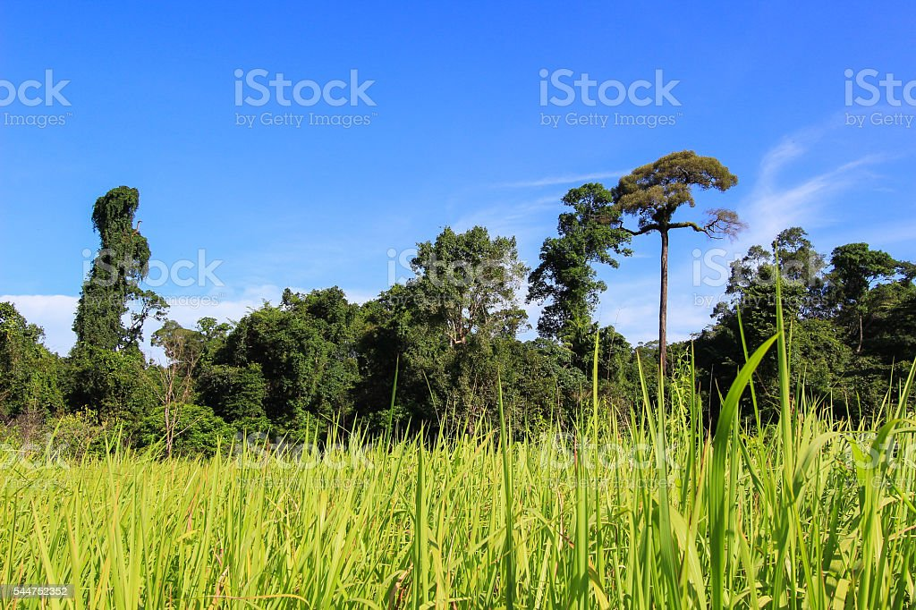 beautiful nature of green meadow and trees with blue sky stock photo
