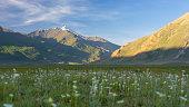 Beautiful nature of Zanskar valley with wild flower, India