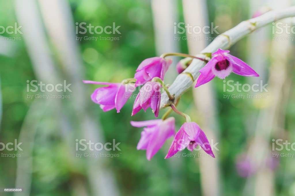 Beautiful nature orchid pink flower stock photo