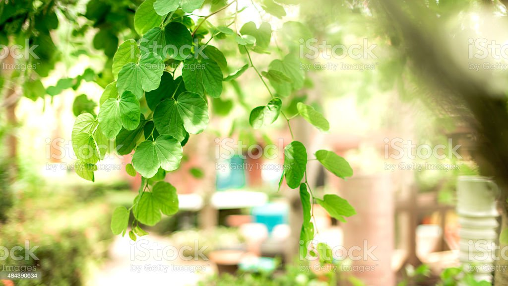 Beautiful nature with green leaves and branches hanging. royalty-free stock photo