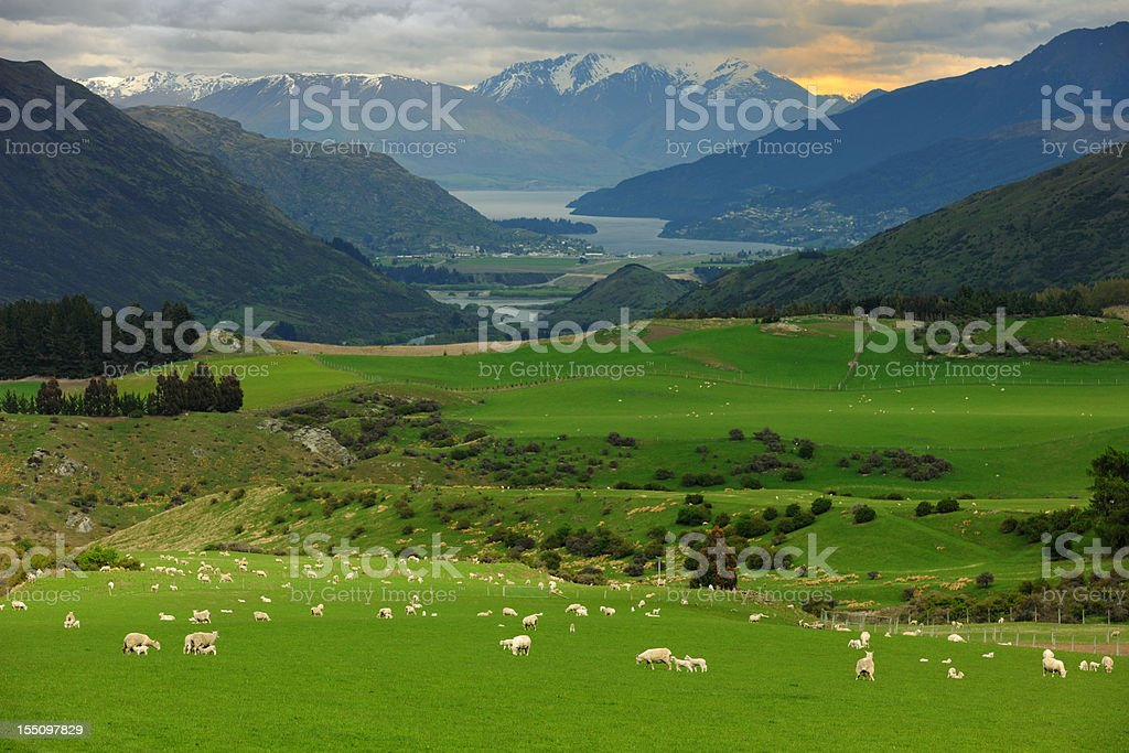 Beautiful New Zealand (XXXL) royalty-free stock photo