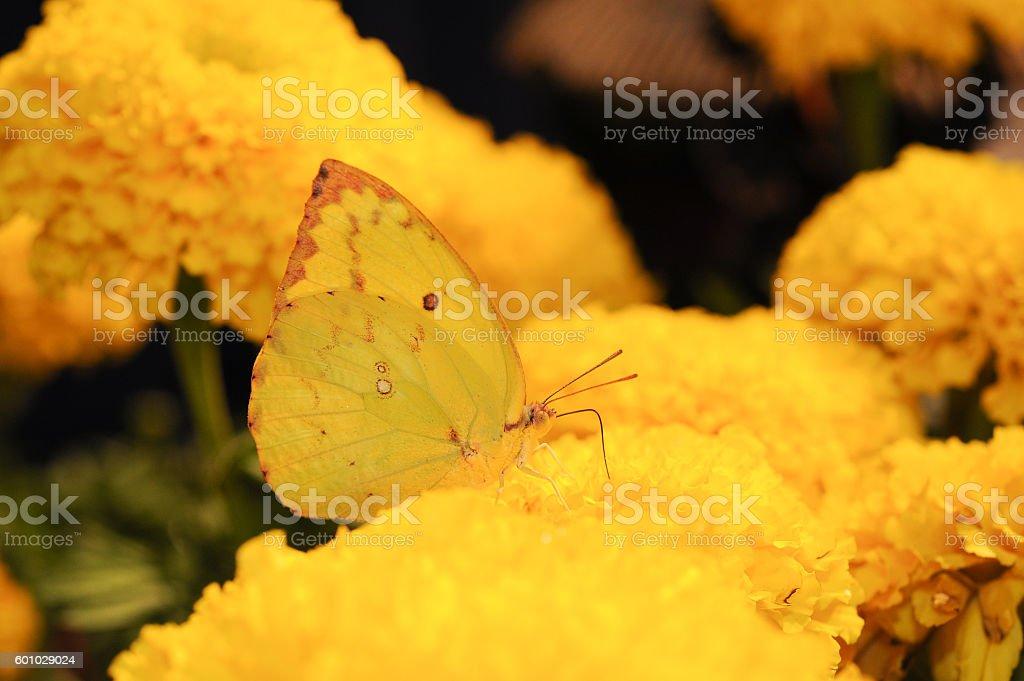 Beautiful night butterfly. stock photo