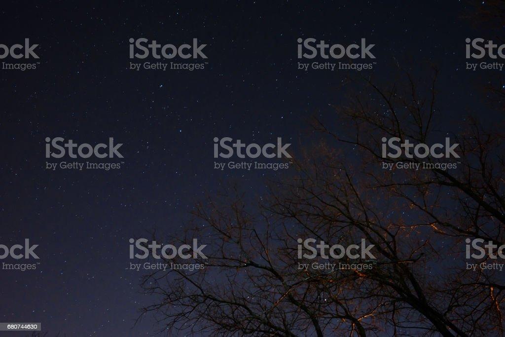 beautiful night sky, the Milky Way and the trees stock photo