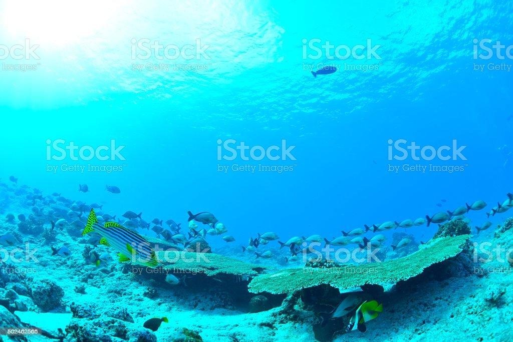 Bela mar e peixes foto de stock royalty-free