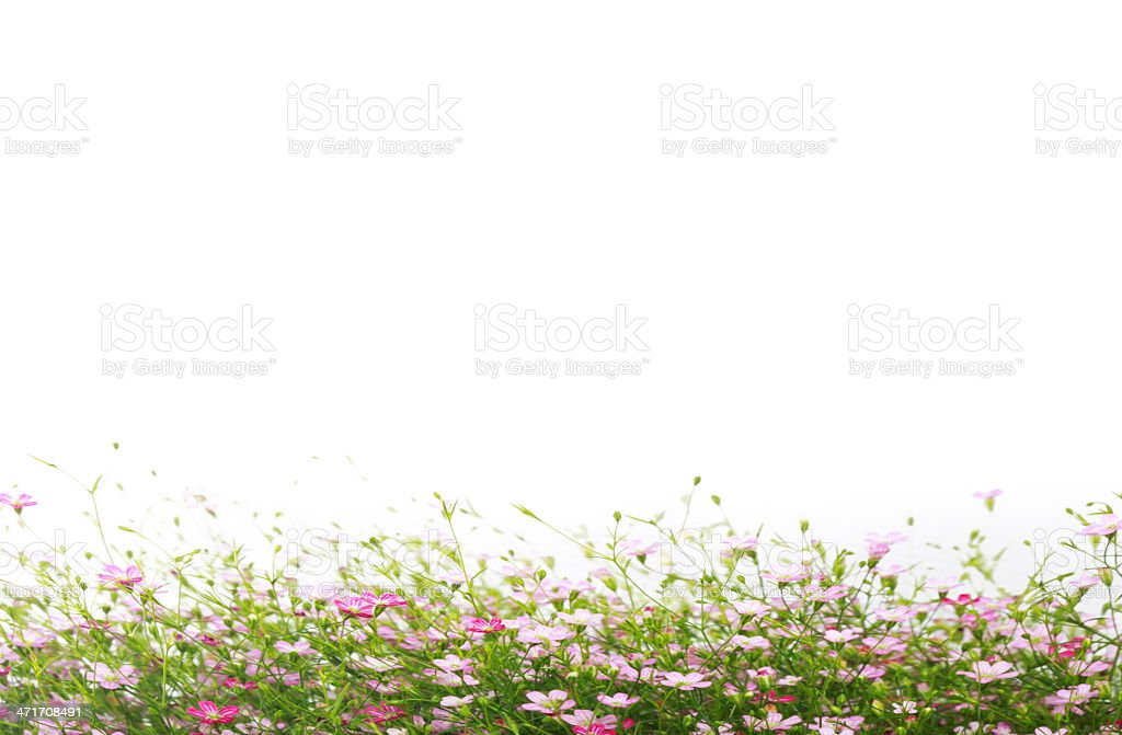 beautiful of bright flowers royalty-free stock photo