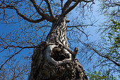 beautiful old tree with hole
