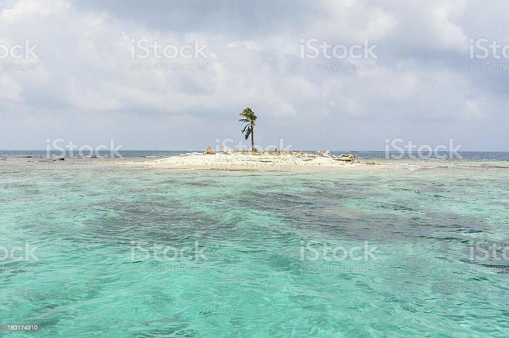 Beautiful One Palm Tree Island, San Blas, Panama. Central America. stock photo