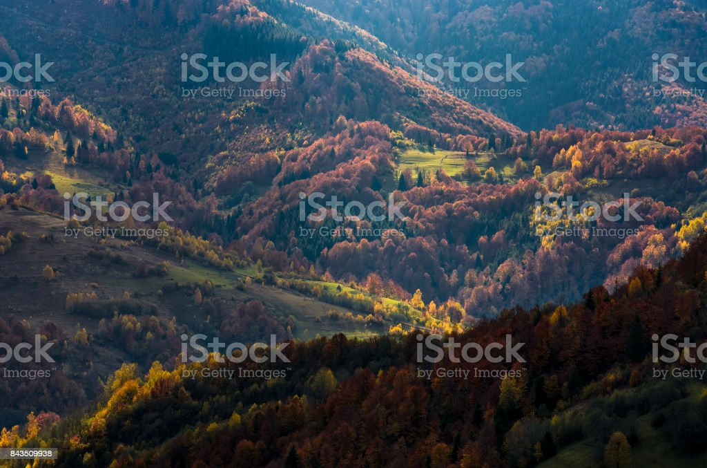 Beautiful orange and red autumn forest on hills stock photo
