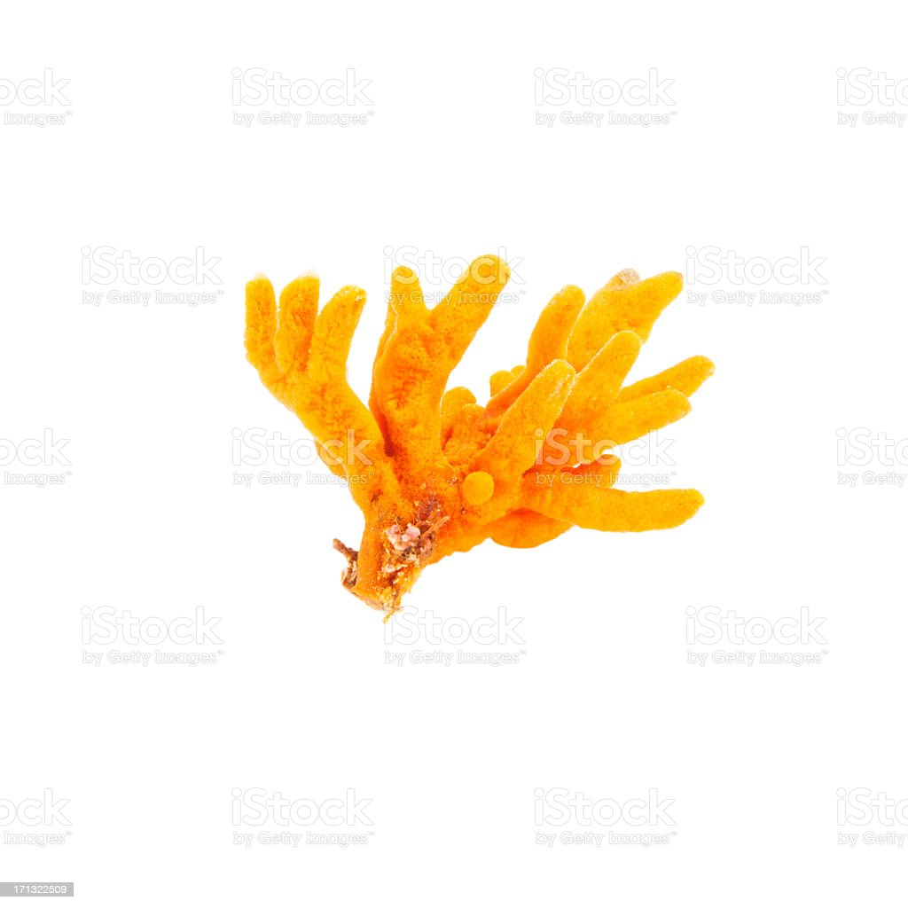 Beautiful orange coral from them sea bed stock photo