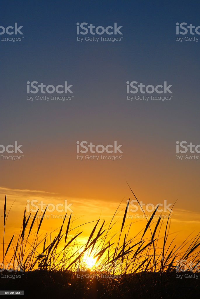 Beautiful orange sunset with wild grass in the foreground stock photo