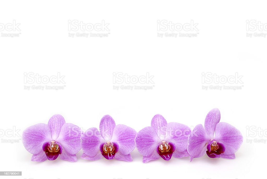 Beautiful orchid border stock photo