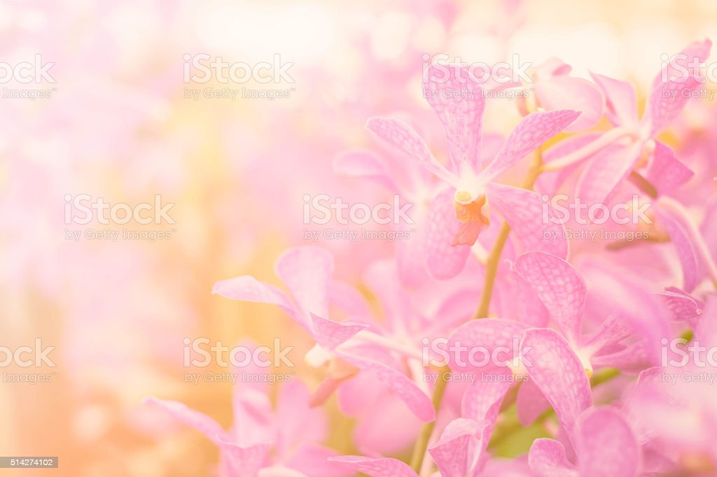 Beautiful Orchid flower bloom with soft focus and blur background stock photo