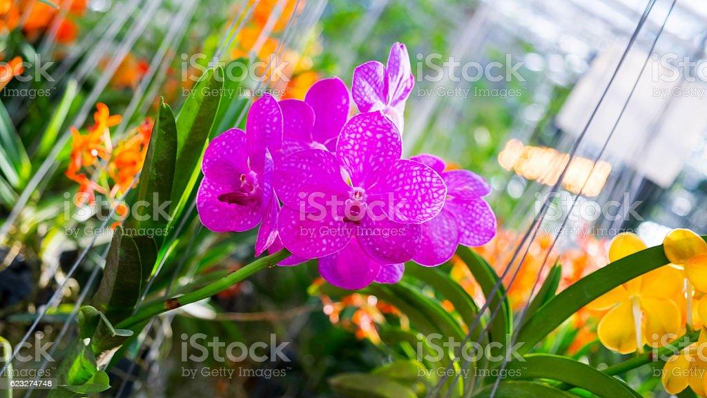 Wunderschöne Orchideen Blumen  Lizenzfreies stock-foto