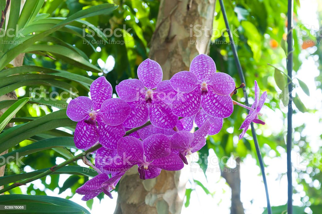 Orchid Pink Water Reflection Flowers Sunshine Beautiful Flower