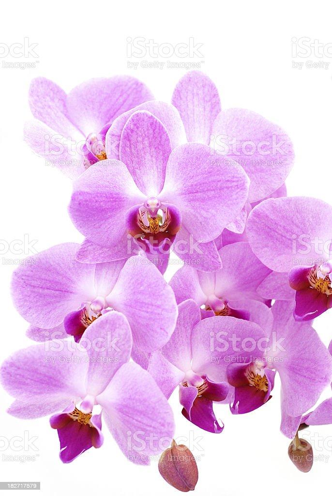 Beautiful orchid stock photo