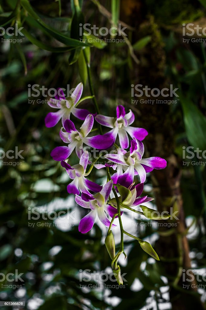 Beautiful Orchid Plant from Ecuador stock photo